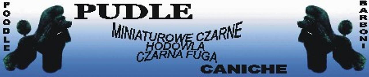 Czarna Fuga FCI